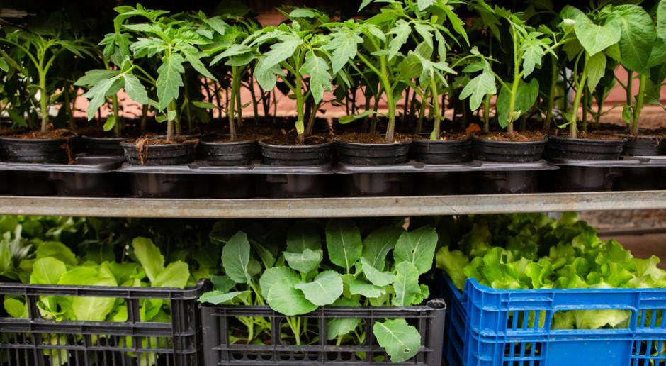 Bronisze: Sezon na rośliny ogrodowe