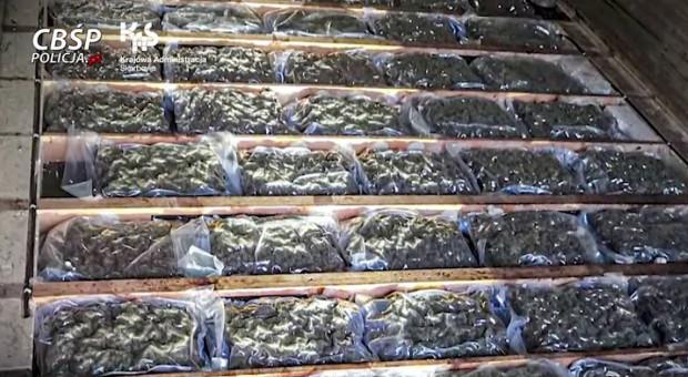 Marihuana w transporcie kalafiorów