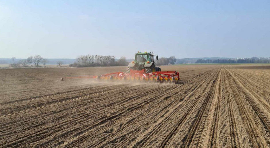 Duże zainteresowanie zakupem nasion buraka przez internet