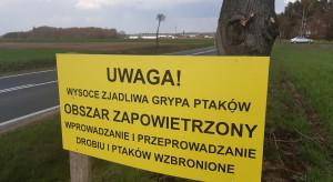 Webinar: Wyeliminować ryzyko zakażeń wirusem grypy ptaków – bioasekuracja stada