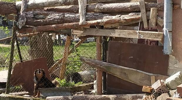 Psy pogryzły chłopca, własciciel zwierząt zatrzymany