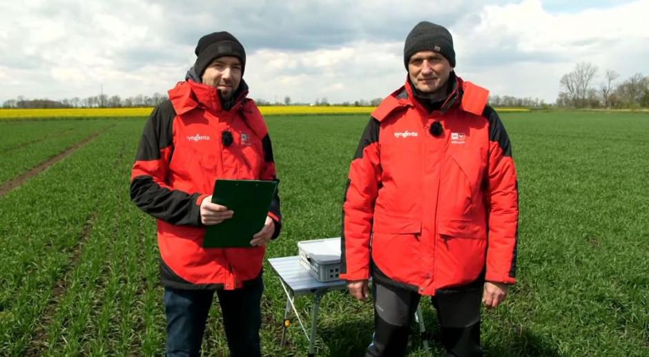 Robert Strycharz i Adam Szepiela z Syngenta na polu pszenicy wysianej 22-23 grudnia