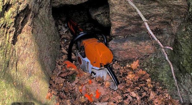 Ukradli drwalom w lesie piły