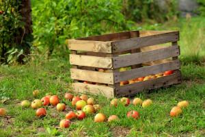 Związek Sadowników RP: trudna sytuacja na rynku jabłek