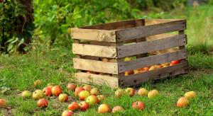 Niskie ceny skupu jabłek - UOKiK już działa w tej sprawie