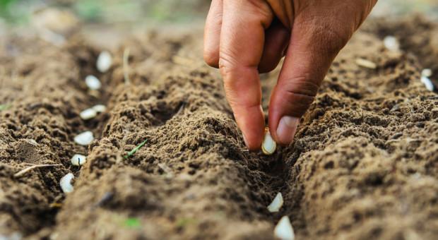 W niedzielę w Chorzowie będą siali dynie