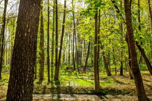 W sosnowcu powstanie Park Bioróżnorodności
