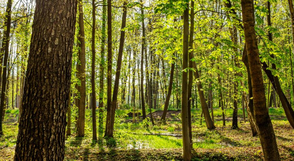 Instytut Badawczy Leśnictwa: duże zagrożenie pożarowe obejmuje połowę kraju