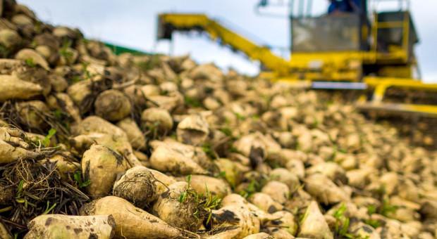 Nordzucker odpowiada plantatorom w sprawie wyższych stawek
