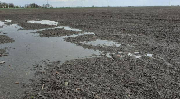 Uruchomiono program pomocowy dla plantatorów buraka cukrowego