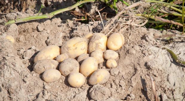 Chroń ziemniaki kompleksowo