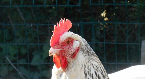 Czy są pieniądze na zwalczanie chorób zakaźnych zwierząt?