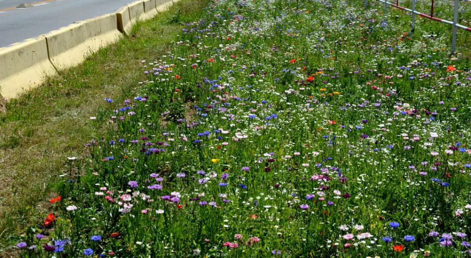 Studenci biologii UwB będą badać kwietne łąki w miastach