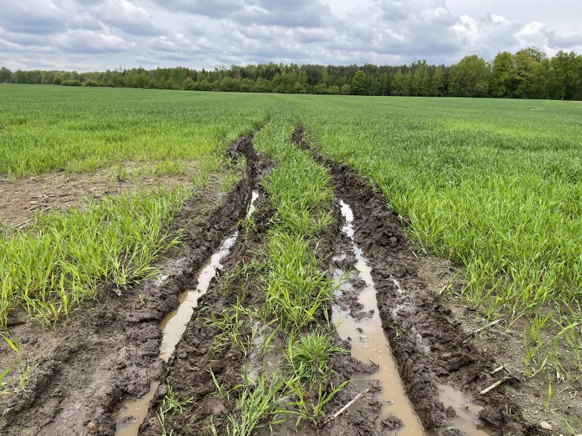 Deszcze mogą skutecznie utrudniać ochronę Fot. KB