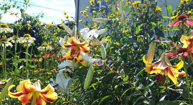 Jak rolnik może wspierać bioróżnorodność?