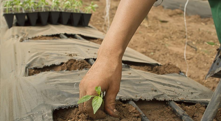 Jakie wsparcie dla małych gospodarstw w nowej WPR?