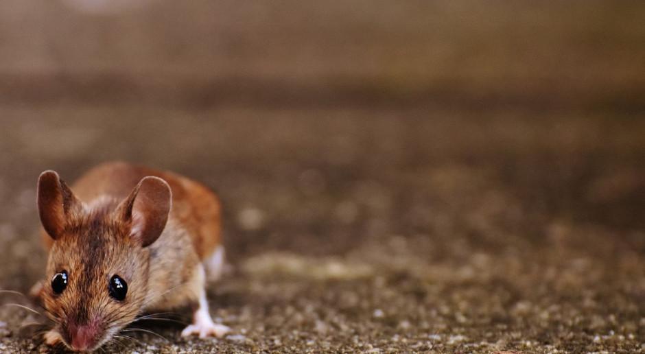 Myszy odcięły część Australii od internetu