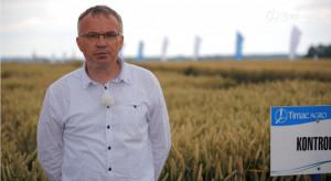 Panorama Pól Timac Agro - nawożenie pszenicy ozimej