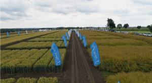 Panorama Pól Timac Agro - warunki