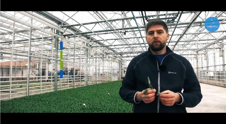 Odpowiednie odżywianie rozsady warzyw gruntowych