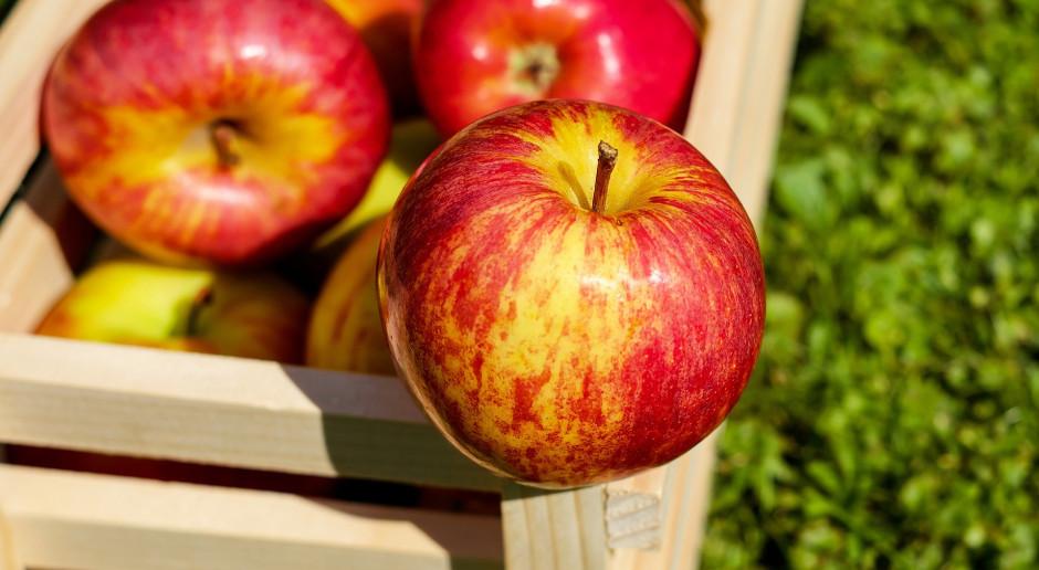 Jak poprawić wybarwienie owoców przez odpowiednie nawożenie