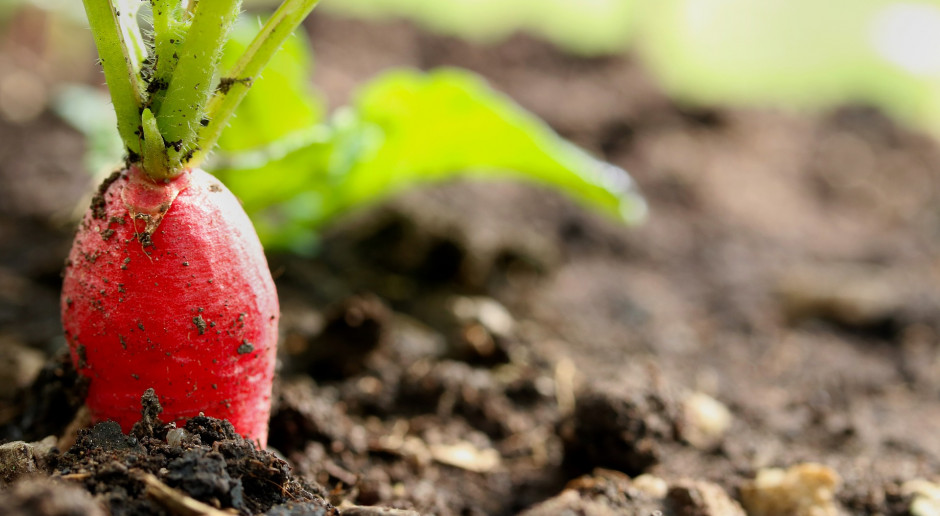 Nawadnianie z nawożeniem czyli fertygacja w uprawie warzyw