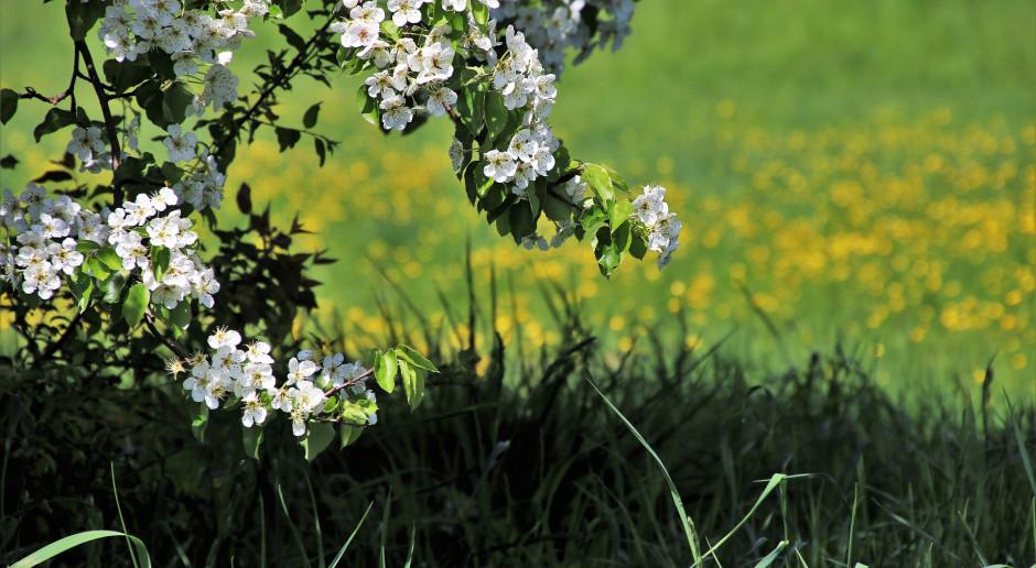 Odżywianie wapniem i magnezem po kwitnieniu