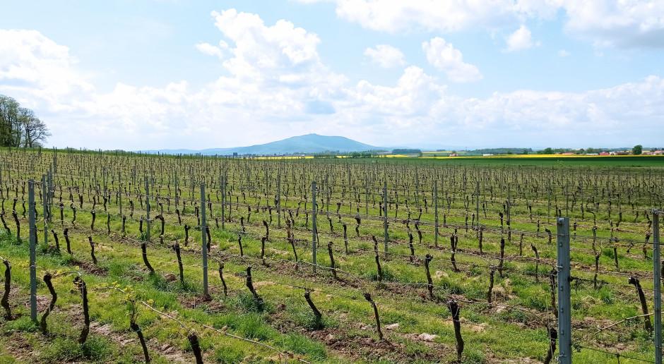 Jak się robi wino musujące? Wizyta w winnicy Adoria