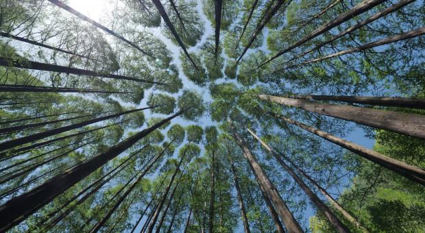 Lasy Państwowe zarządzają 30 proc. powierzchni naszego kraju