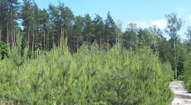 Słabo rośnie? To może weź pieniądze i posadź las?