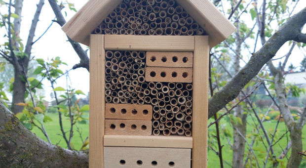 Pszczoły murarki – znakomici zapylacze
