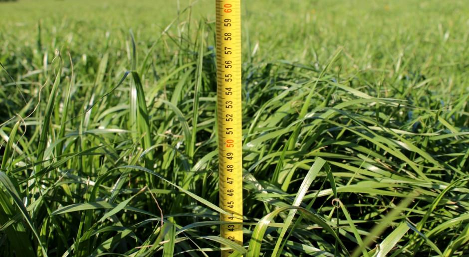 Pierwszy pokos traw – termin a jakość paszy