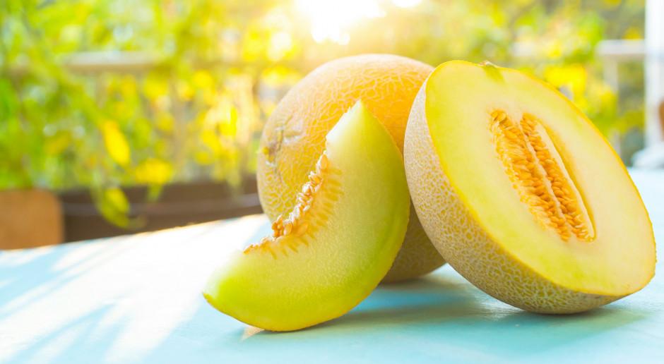 Dwa melony z Hokkaido sprzedane za równowartość 91,5 tys. zł