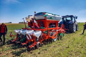 Agrotechnika kukurydzy według Agro-Maszu