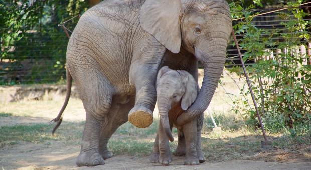 Czy zwierzęta świętują Dzień Matki?