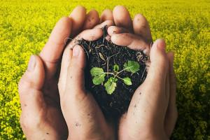 Więcej zapraw nasiennych pochodzenia naturalnego