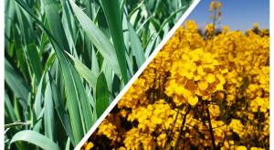 Webinar z firmą Bayer: Zabieg w terminie T-2 w pszenicy oraz najnowsze odmiany rzepaku