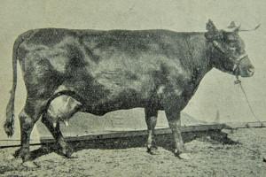 Doskonalenie produkcjizwierzęcej