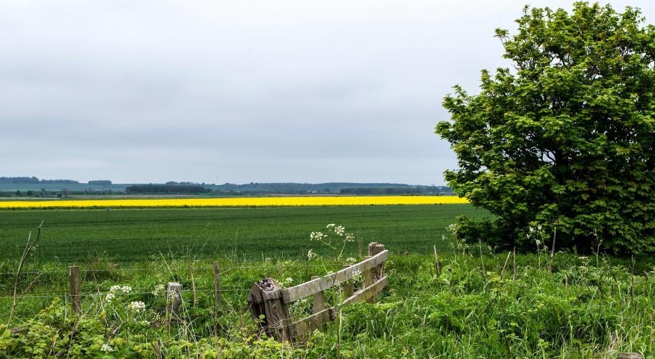 Jaki średni czynsz za dzierżawę z KOWR w 2020 roku?