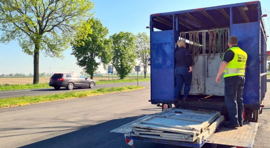 Ciężarówka z krowami zatrzymana, rolnik ukarany