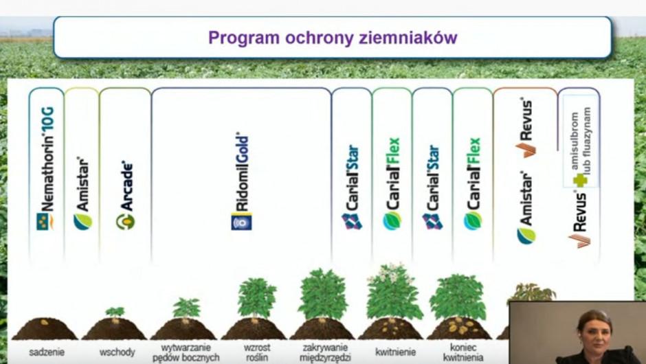 Program ochrony ziemniaka proponowany przez Syngentę, fot. slajd z webinarium