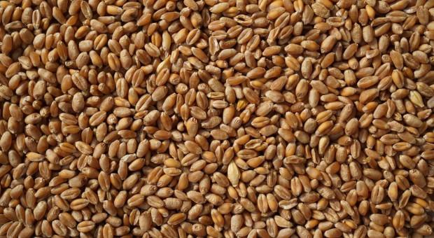 Elewarr o sytuacji na rynku zbóż