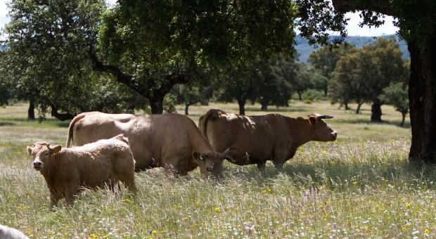 Hiszpania: Rząd chce bardziej ekstensywnego rolnictwa
