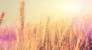 Spadek cen zbóż na światowych rynkach