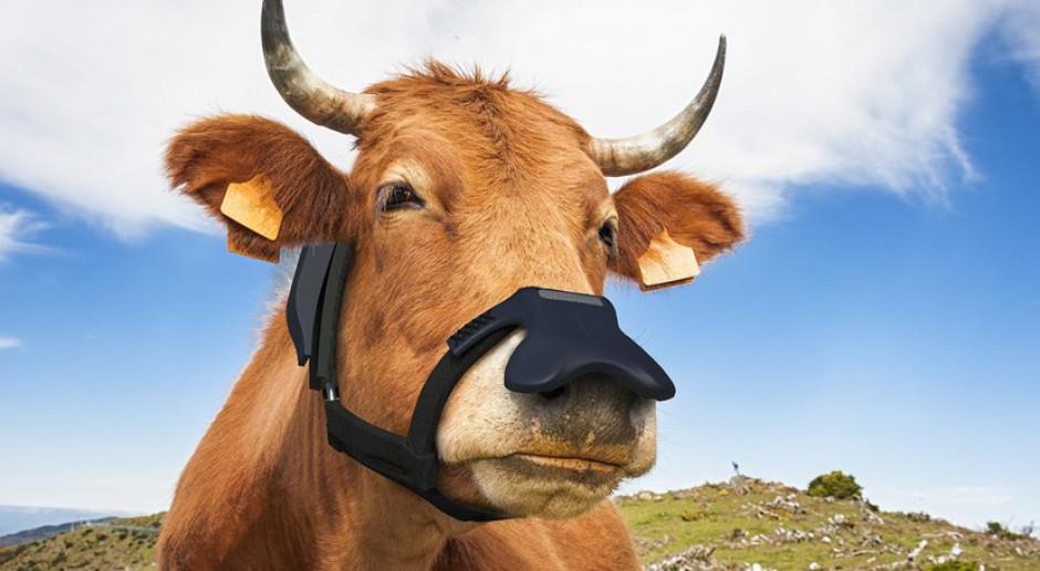 Cargill planuje sprzedaż wychwytujących metan masek dla bydła