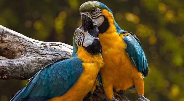 Wrocław: Po remoncie otwarto w zoo zabytkowy budynek ptaszarni