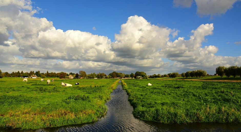 Holandia - największa wartość produkcji na gospodarstwo w UE