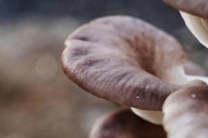 Podłoże po produckcji grzybów to już nie odpady