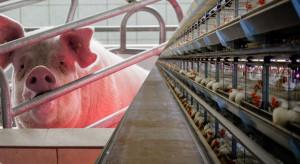 Kolejny krok w kierunku zakazu klatek w produkcji zwierzęcej