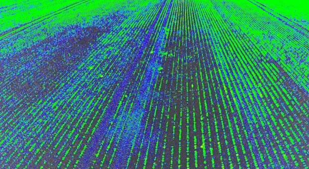 Drony kontrolują plantacje buraka cukrowego